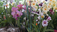 Country fair flowers 2 Stock Footage