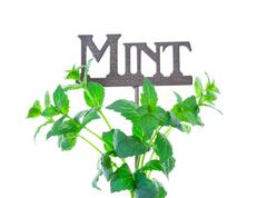 mint with garden marker - stock photo