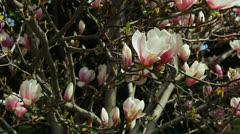Beautiful flower - Parque do Retiro Garden - Madrid, Spain Stock Footage