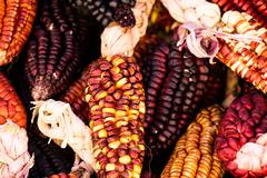 Stock Photo of a close up or cheerful and colorful dried indian corn