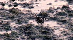 Crab, Crustacean, Sea Creatures, Animals - stock footage