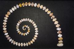 Clam Shell Diversity Stock Photos