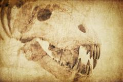 Spooky skull diabolical creatures. vintage styled background Stock Photos