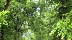 Branchs of trees with leaves - stock footage