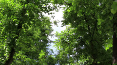 Branchs of trees with leaf - stock footage