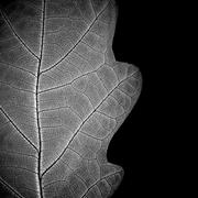 ?lose-up of leaf veins, monochrome. Stock Photos