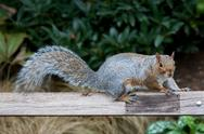 Stock Photo of Cute Squirrel on a Wooden Board