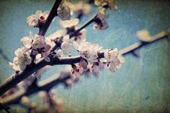 Vintage apple-tree flowers at spring Stock Photos