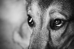 Look of the dog. vintage styled grainy shot. Stock Photos