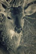deer head. toned closeup shot - stock photo