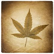 Cannabis leaf. vintage background with torn edges. isolated on white Stock Illustration
