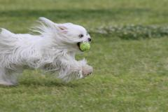 Koiran turkista Toiminta Kuvituskuvat
