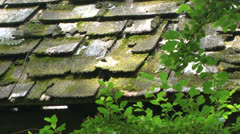 Old shake shingle roof Stock Footage