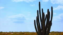 Cactus timelapse 01 Stock Footage