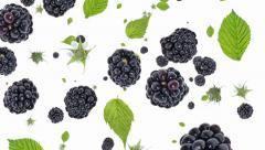 Blackberries falling down (ends on blue) Stock Footage