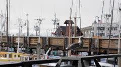 Seagull Curious, Fishing Boats Fisherman's Wharf, San Francisco, Pier 39 Marina Stock Footage