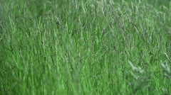 Garden Plants Slomotion Highspeed Stock Footage