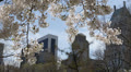 New York City Skyline, Corporate Buildings, Blooming Cherry Trees Central Park  Footage