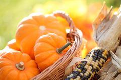 Autumn arrangement Stock Photos