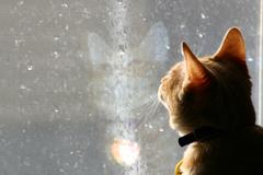 Cat looking out at the rain - stock photo