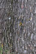 tree trunks background - stock photo