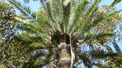Palm trees in Cadiz. City of Cadiz, Spain, Andalusia. Stock Footage