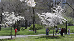 Crowds of People Passing in NYC Central Park, Cherry Trees Spring New York City - stock footage