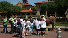children learn about longhorn cattle, fort worth - stock footage