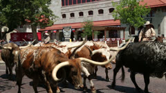 cattle drive, fort worth stockyards, texas, usa - stock footage