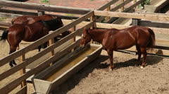 Horses at water trough, fort worth stockyards, texas Stock Footage