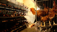 Chicken farm Stock Footage