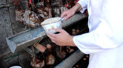 Chicken farm food Stock Footage
