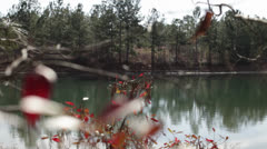 Leaves and Water at Lugoff Forest South Carolina HD Video Stock Footage