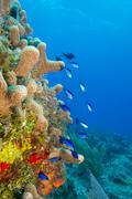 Shallow reefs Stock Photos