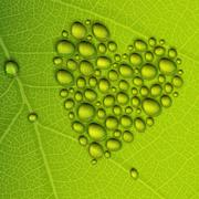Heart shape dew drops on green leaf. vector illustration, eps10 Stock Illustration