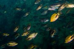 Cenotes Stock Photos