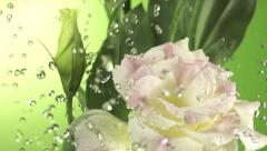 Spring Water splashing over a flower Stock Footage