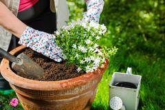 Stock Photo of planting flowers