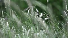Garden Plants Slomotion Highspeed Stock Footage