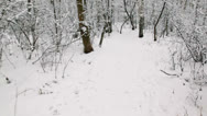 Stock Video Footage of Motion by path among trees in snow covered park at winter day