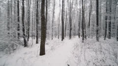Motion among trees park covered by snow at winter day Stock Footage