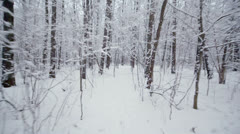 Motion among trees in grove covered by snow at winter day Stock Footage