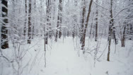 Stock Video Footage of Motion among trees in grove covered by snow at winter day