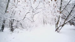 Snow covers branch of ash-leaved maple tree at winter day Stock Footage