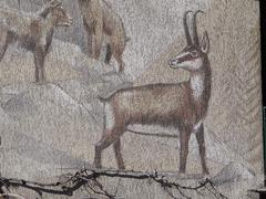chamois on rocky crags - stock illustration