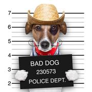 Bad mexican dog Stock Illustration