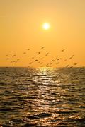reflexion of light of the sunset. - stock photo