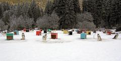 Sled dog team Stock Photos