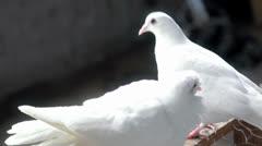 White Doves Stock Footage
