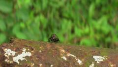 The Fly Stock Footage